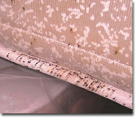 bed bug mattress cleaning